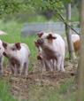 Der er generel enighed om, at der er en række fordele forbundet med et kombinere produktion af grise og træbiomasse. Foto: Marianne Hestbjerg